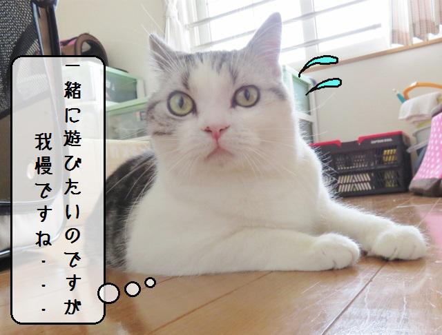 f:id:suzumesuzume:20190404125125j:plain