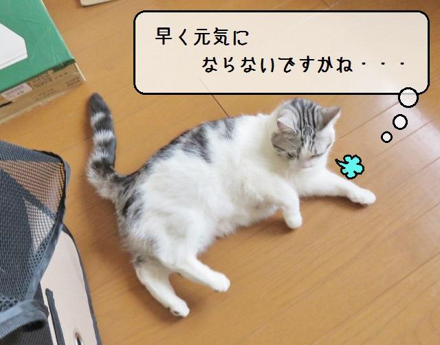 f:id:suzumesuzume:20190404212800j:plain