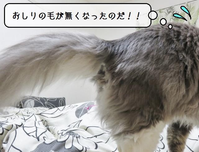f:id:suzumesuzume:20190408133735j:plain