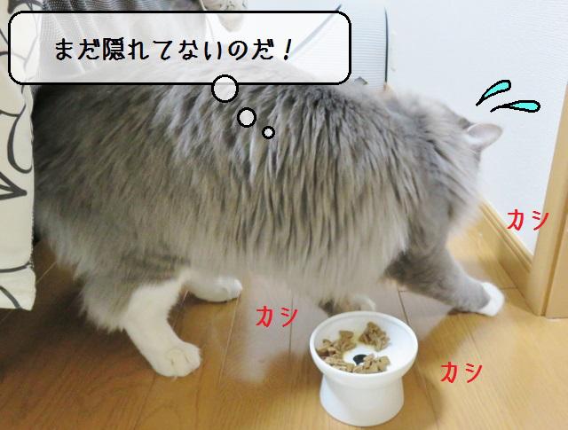 f:id:suzumesuzume:20190411134656j:plain