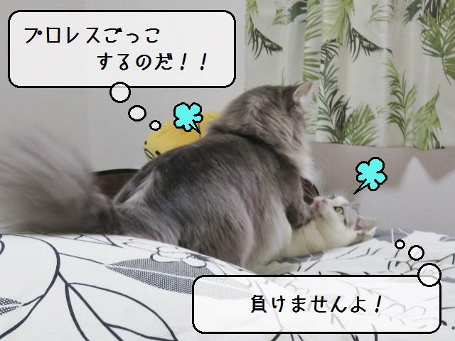 f:id:suzumesuzume:20190415141425j:plain
