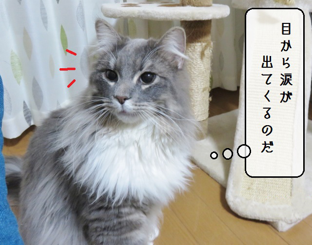 f:id:suzumesuzume:20190415141522j:plain