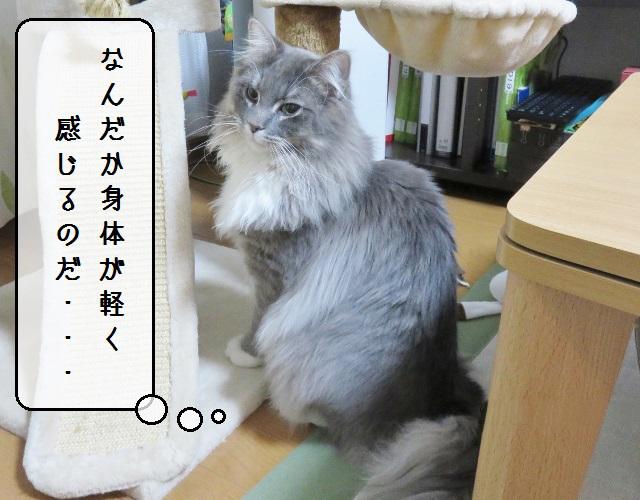 f:id:suzumesuzume:20190417135351j:plain