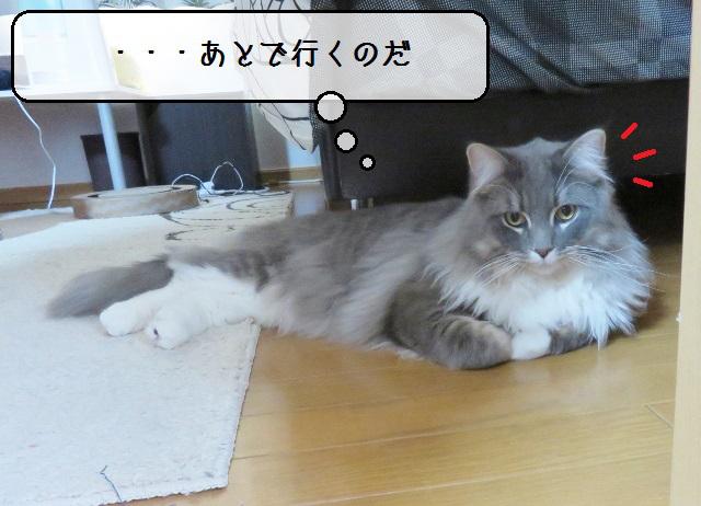 f:id:suzumesuzume:20190418130355j:plain