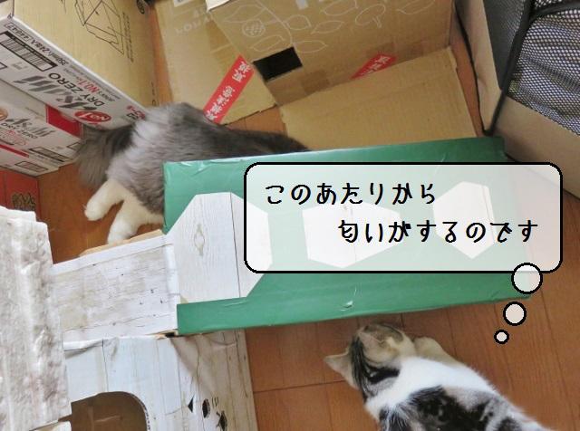 f:id:suzumesuzume:20190422144819j:plain