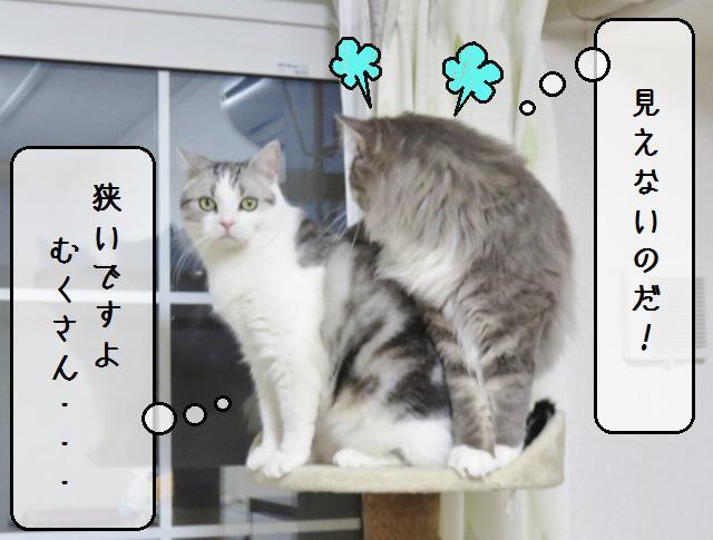 f:id:suzumesuzume:20190423144226j:plain