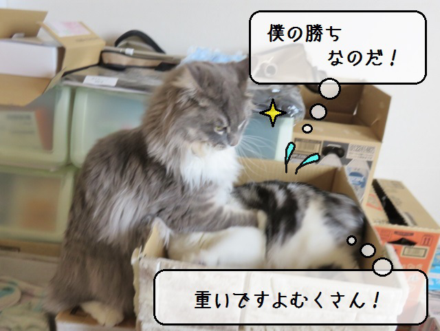 f:id:suzumesuzume:20190424144325j:plain