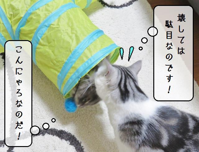 f:id:suzumesuzume:20190425155700j:plain