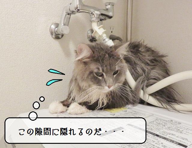 f:id:suzumesuzume:20190515143948j:plain
