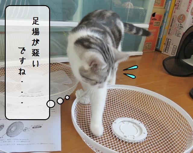 f:id:suzumesuzume:20190522192712j:plain