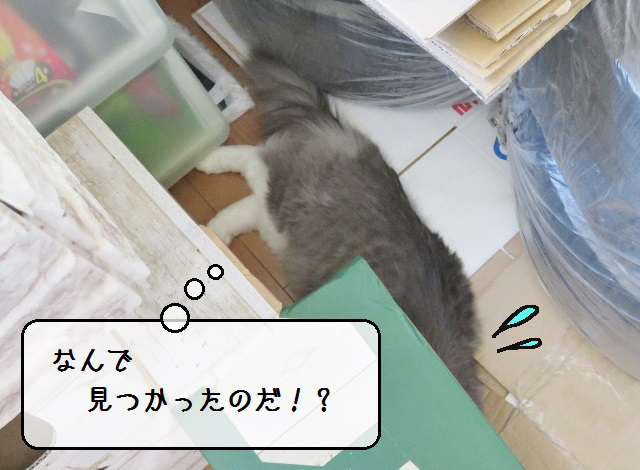 f:id:suzumesuzume:20190530131346j:plain