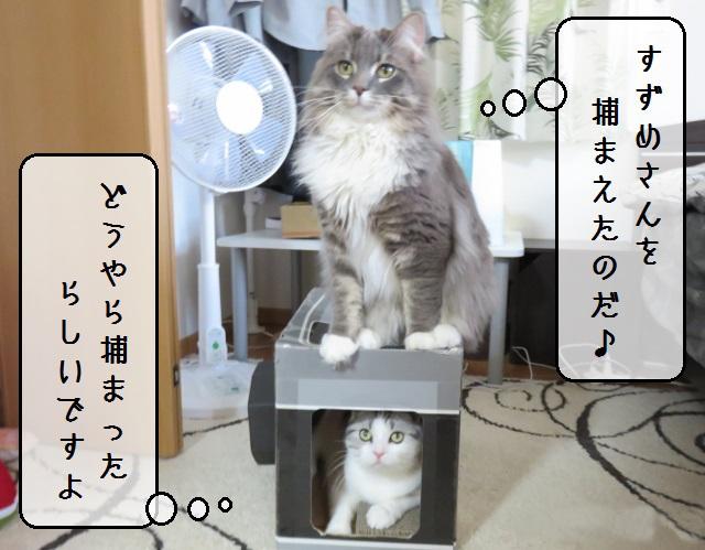 f:id:suzumesuzume:20190603143042j:plain