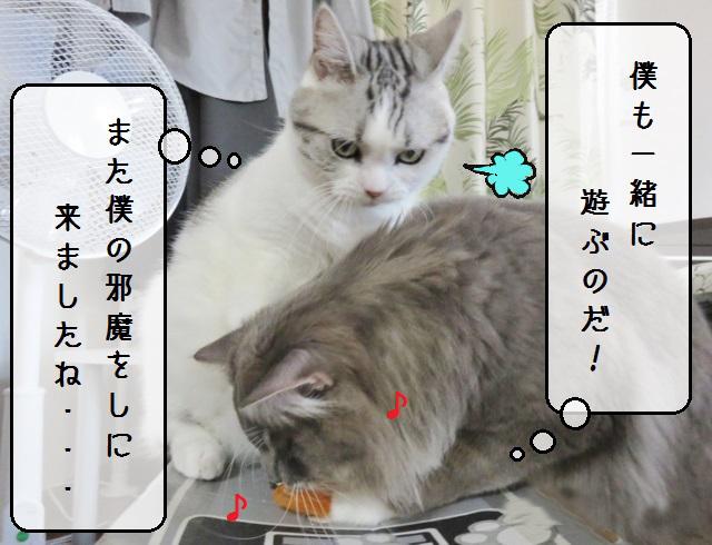 f:id:suzumesuzume:20190603143107j:plain