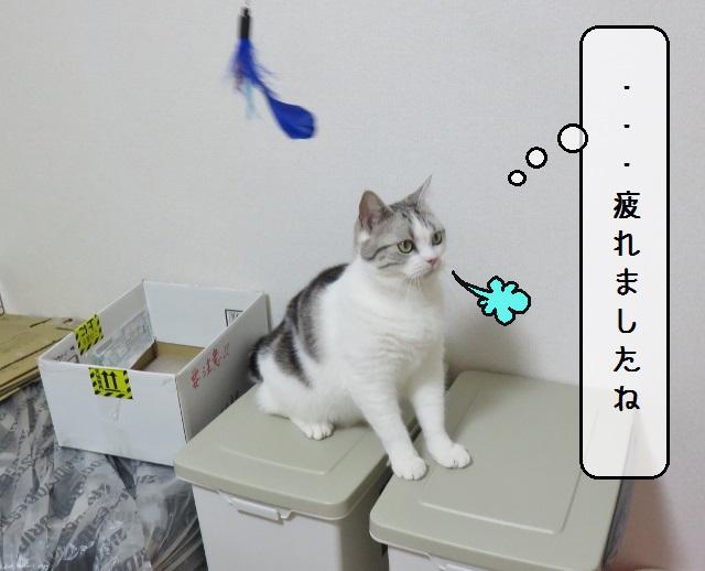 f:id:suzumesuzume:20190611204627j:plain