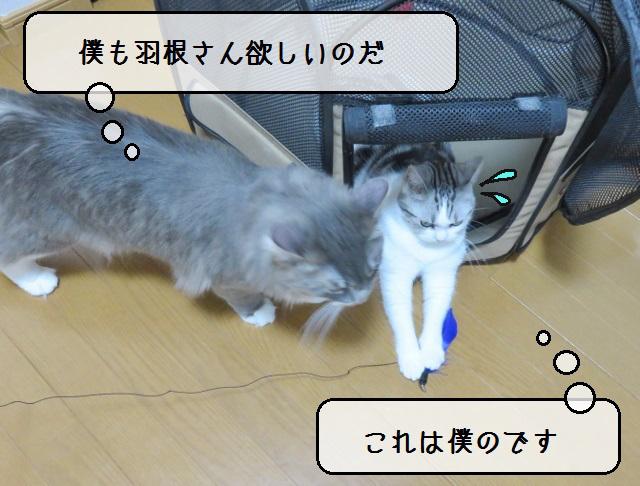 f:id:suzumesuzume:20190614201639j:plain