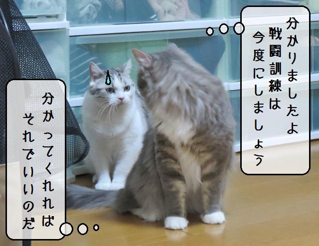 f:id:suzumesuzume:20190617150021j:plain