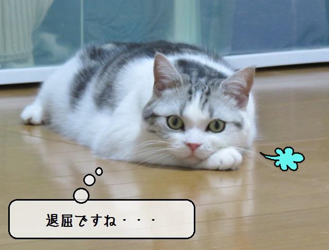 f:id:suzumesuzume:20190617150032j:plain