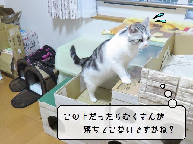 f:id:suzumesuzume:20190618133444j:plain