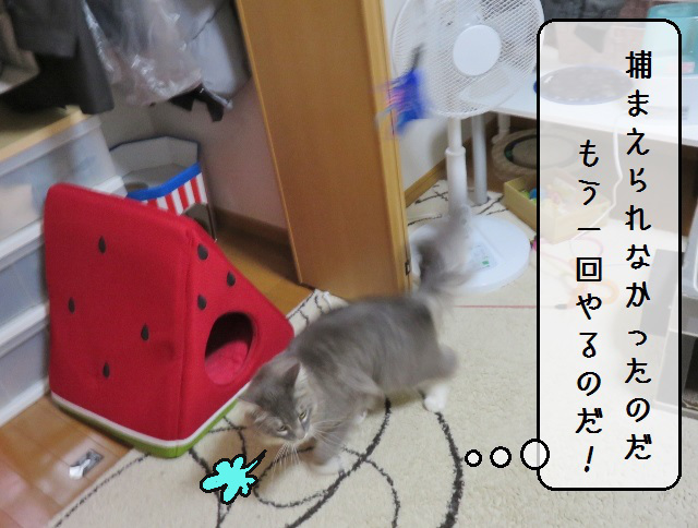 f:id:suzumesuzume:20190618133534j:plain