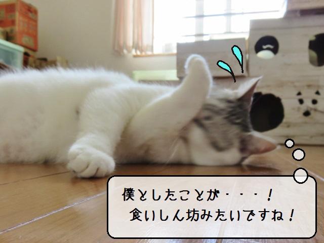 f:id:suzumesuzume:20190620133222j:plain