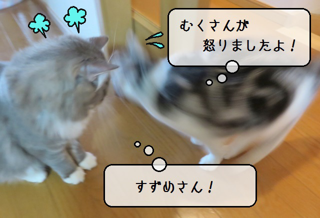 f:id:suzumesuzume:20190624133638j:plain