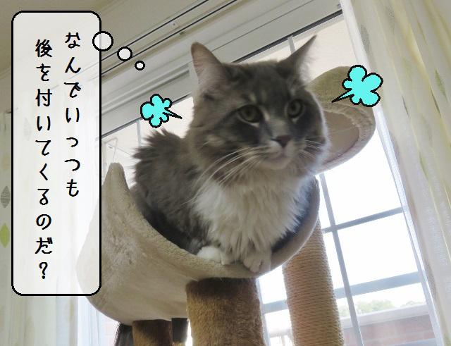 f:id:suzumesuzume:20190625204436j:plain