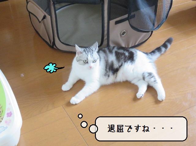 f:id:suzumesuzume:20190724141239j:plain