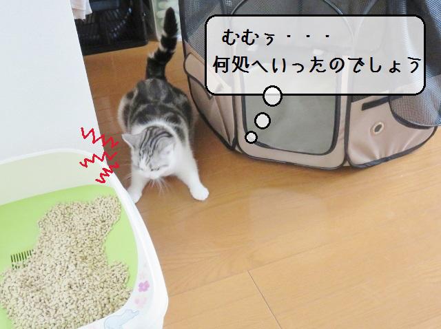 f:id:suzumesuzume:20190724141259j:plain
