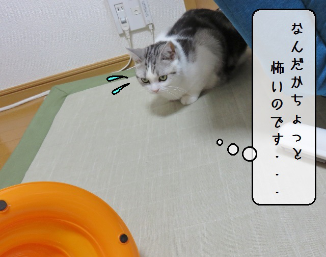 f:id:suzumesuzume:20190729143417j:plain