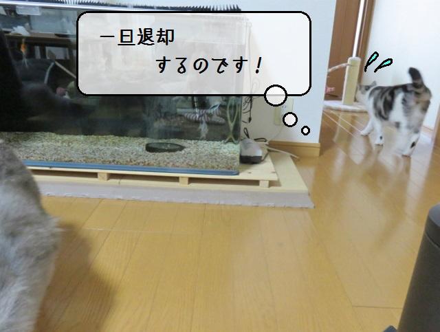 f:id:suzumesuzume:20190809201250j:plain