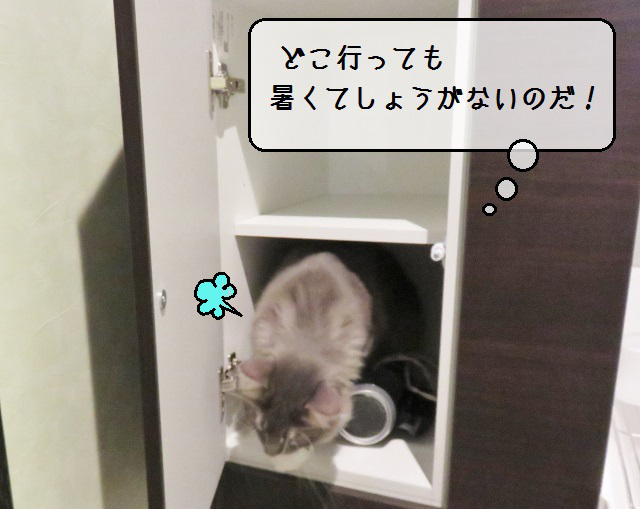 f:id:suzumesuzume:20190822173546j:plain