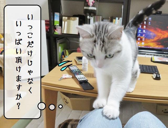 f:id:suzumesuzume:20190826191302j:plain