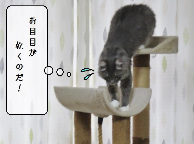 f:id:suzumesuzume:20190909185937j:plain