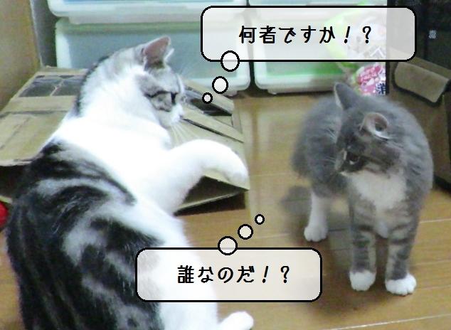 f:id:suzumesuzume:20190910190721j:plain