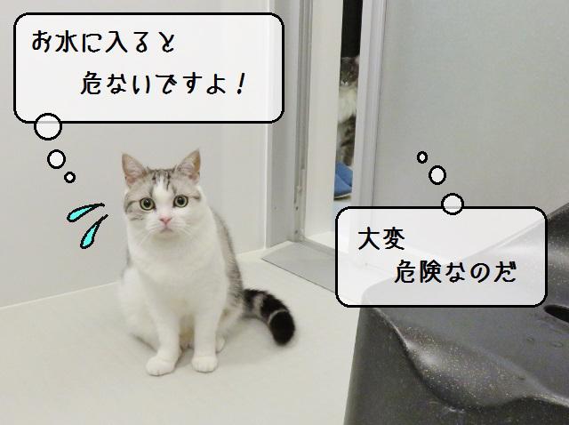 f:id:suzumesuzume:20191108182007j:plain