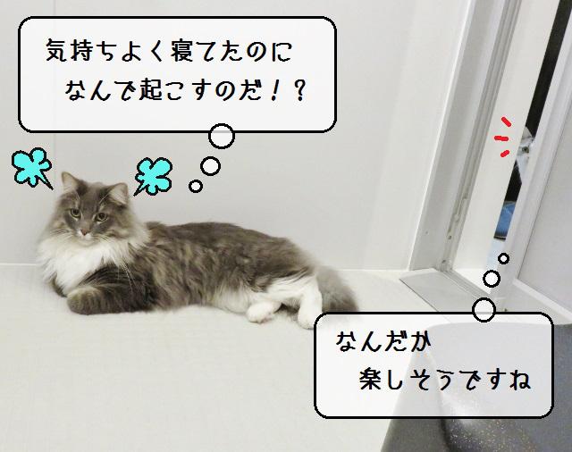 f:id:suzumesuzume:20191108182043j:plain