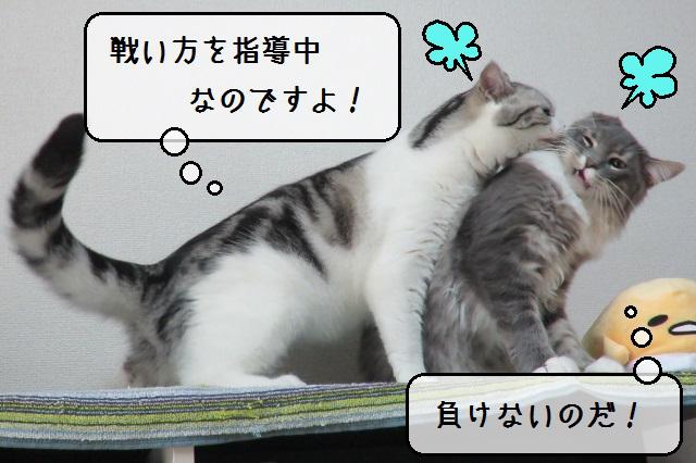 f:id:suzumesuzume:20191118200215j:plain