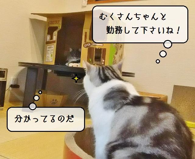 f:id:suzumesuzume:20191127200712j:plain