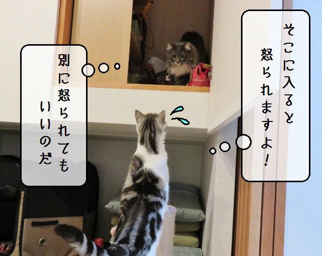 f:id:suzumesuzume:20191202203108j:plain
