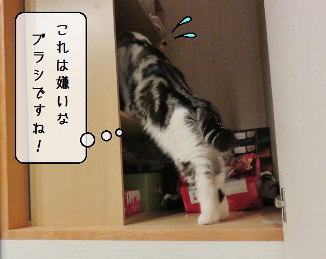 f:id:suzumesuzume:20191202203127j:plain