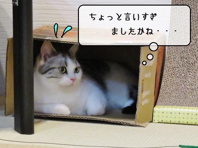 f:id:suzumesuzume:20191203213708j:plain