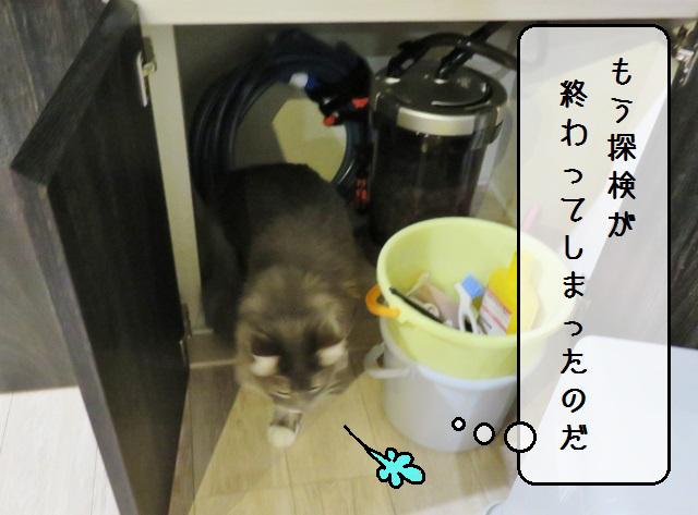 f:id:suzumesuzume:20191204155322j:plain