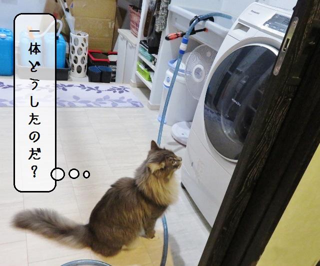 f:id:suzumesuzume:20191204155359j:plain