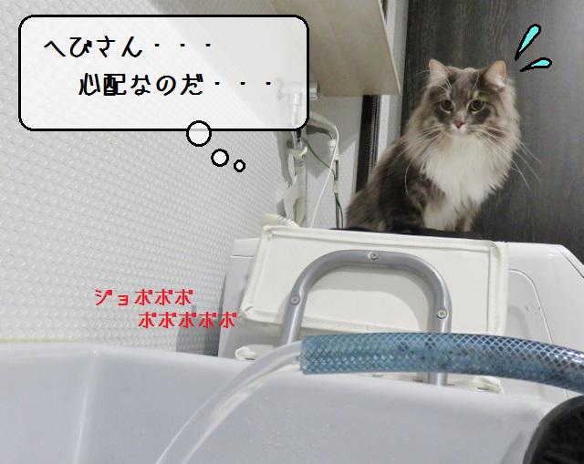f:id:suzumesuzume:20191204155415j:plain