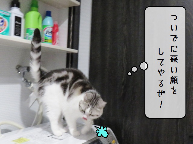 f:id:suzumesuzume:20191209202559j:plain