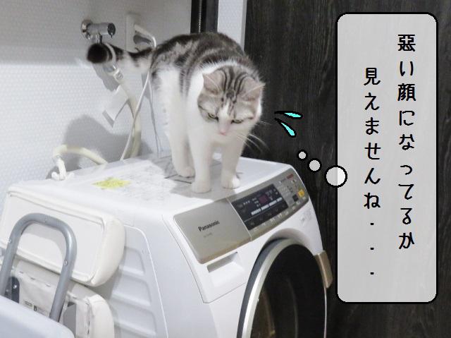 f:id:suzumesuzume:20191209202604j:plain