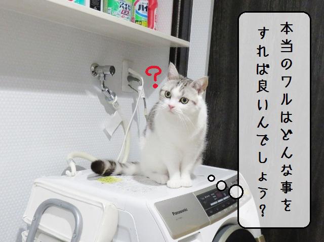 f:id:suzumesuzume:20191209202616j:plain