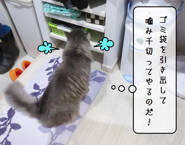 f:id:suzumesuzume:20191209202622j:plain