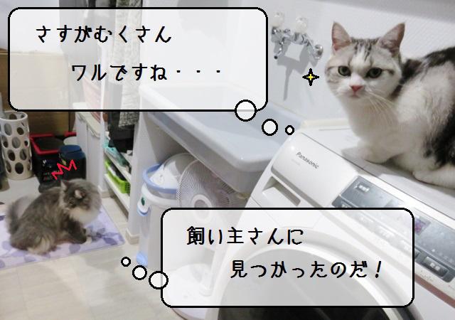 f:id:suzumesuzume:20191209202627j:plain