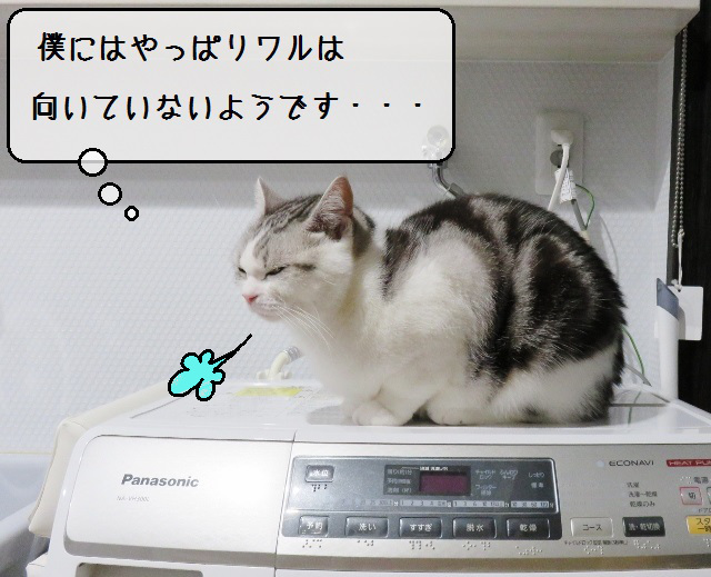 f:id:suzumesuzume:20191209202637j:plain
